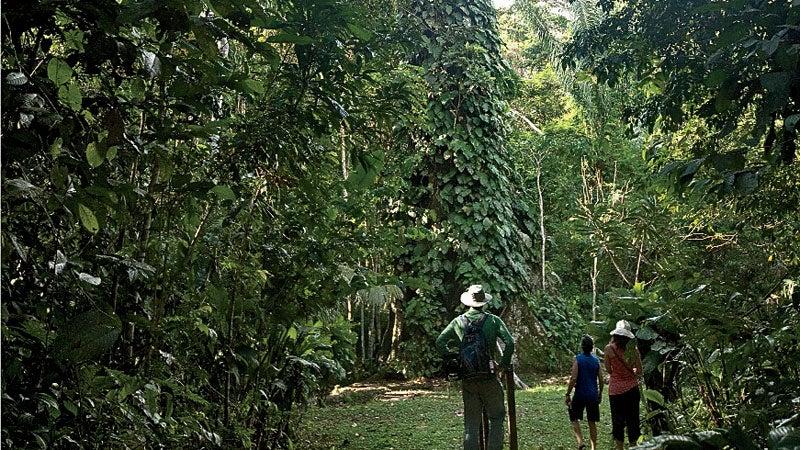 Chris Kilham, Zoe Helena, and writer Steve Hendricks, look at the giant Ceiba tree on the Amazon River.