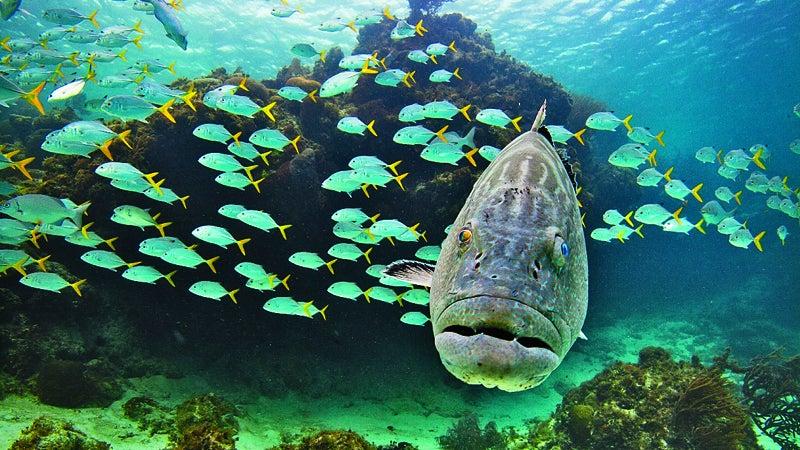 Belize San Pedro ambergris caye underwater