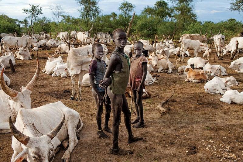 South Sudan indipendence jungle Nile war Juba Mount Kinyeti travel landscape referendum cattle camp