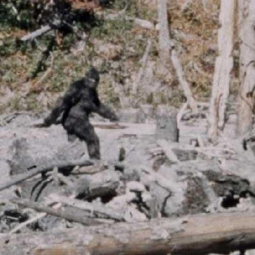 patterson film bigfoot