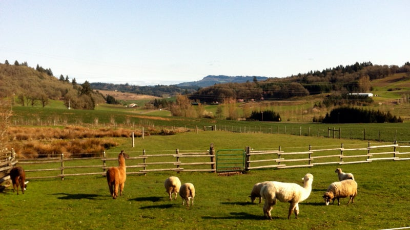 Various pastures throughout the property offer the opportunity to, for instance, pet llamas (you know you've always wanted to).