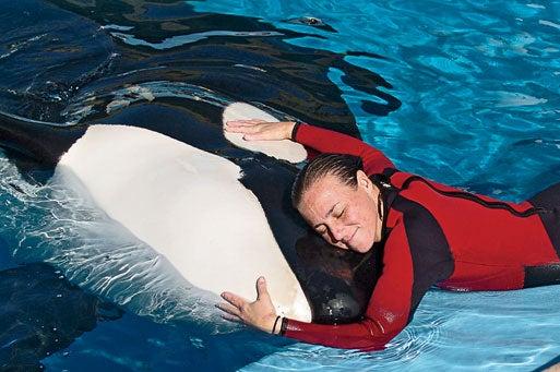 Dawn Brancheau with an orca, December 2005