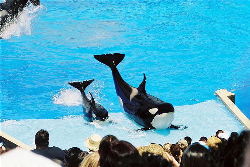 Seaworld Seaworld Trainers Animal Care OutsideOnline