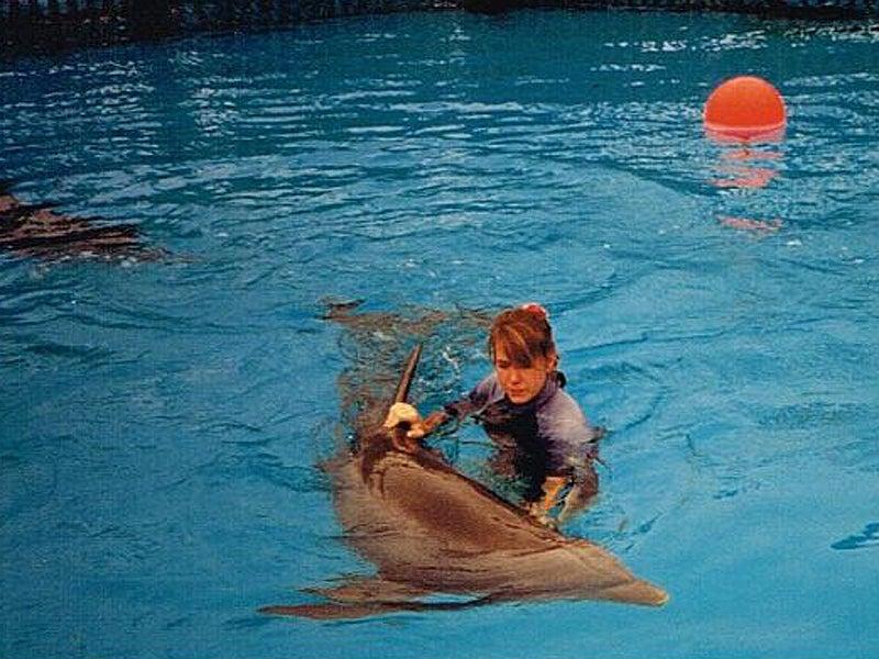 Blackfish Seaworld Animal Care Seaworld Trainers