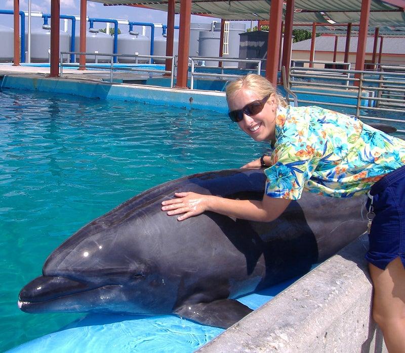 Seaworld Seaworld Trainers OutsideOnline Animal Care Orcas