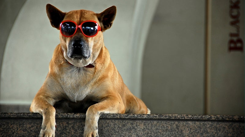 red sunglasses skytrain thailand doggie goggles doggles dog sunglasses dog sun protection sun protection outside outside online outside magazine wild file adventure the current