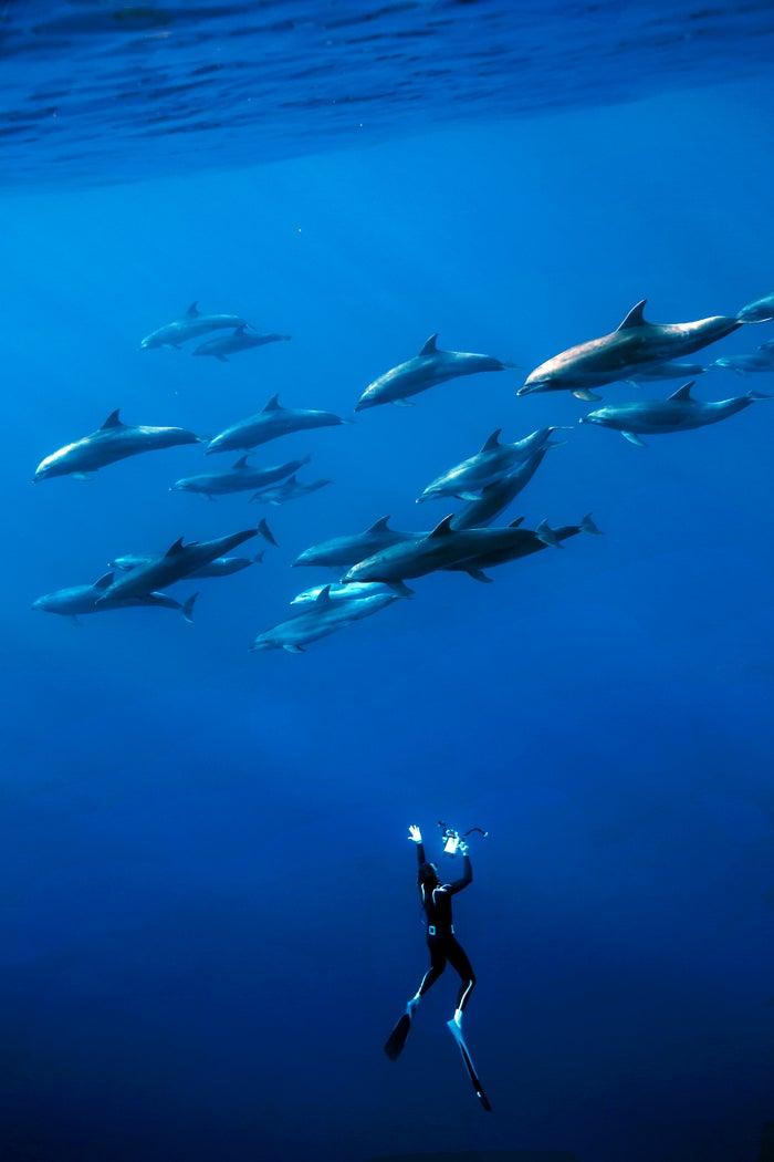 fabrice schnoller, dolphins, deep, james nestor, sperm whales