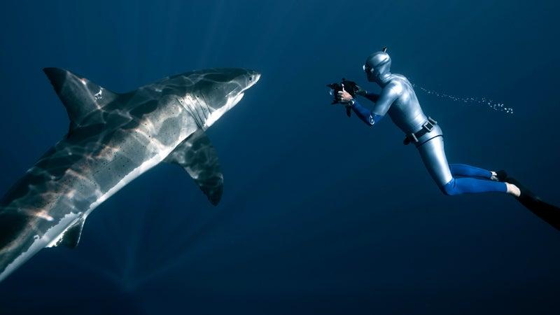 carcharodon carcharias freediver freediving freediving with great white sha great white shark guadalupe island william winram, deep, james nestor, sperm whales