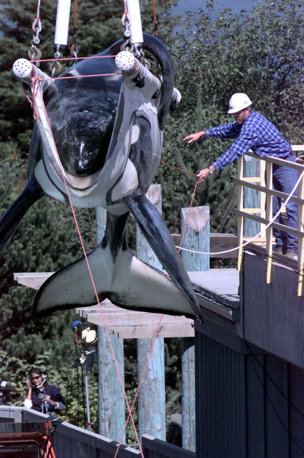 """Keiko, the killer whale star of """"Free Willy,"""" is weighed as he is loaded into his specially made transport tank at the Oregon State Aquarium, on Sept. 9, 1998. Jim Horton worked to return Keiko back to his home waters."""