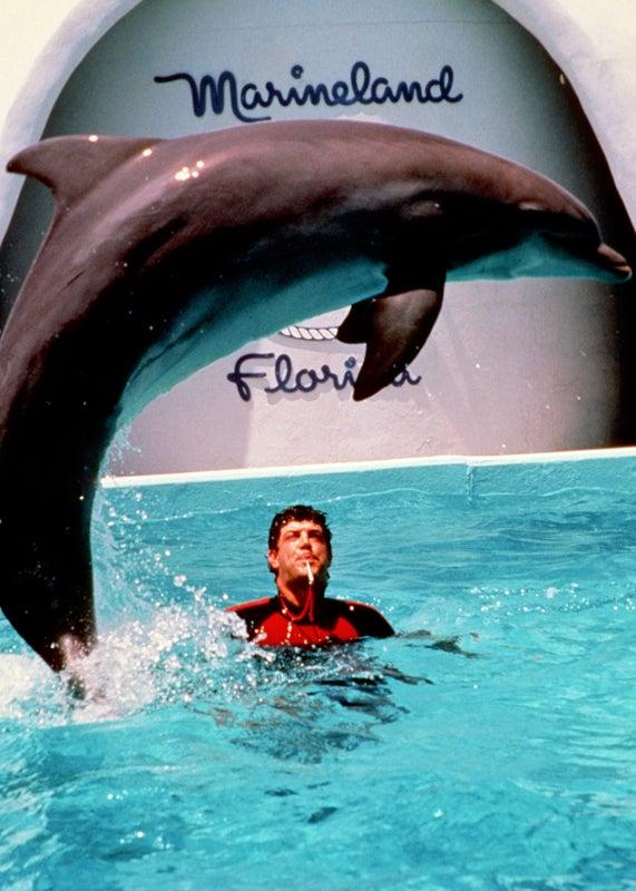 Marine Mammals Marineland Outside Online Military Dolphins