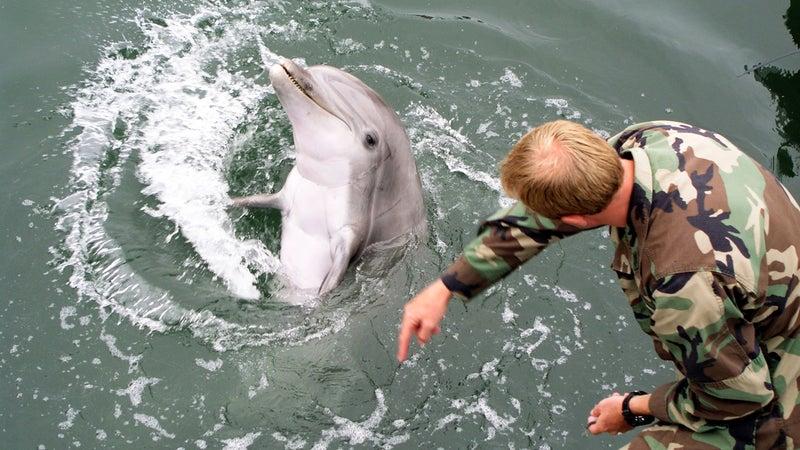 mammal lead shield III dolphin training Outside Online
