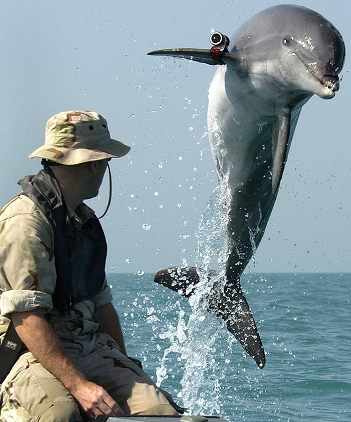 navy, war of the whales, books, cetaceans, dolphins, biosonar, whales