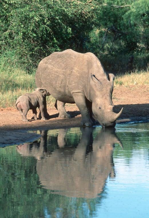 poaching outside magazine outside online namibia zimbabwe rhino geotagging orphan poachers watering hole