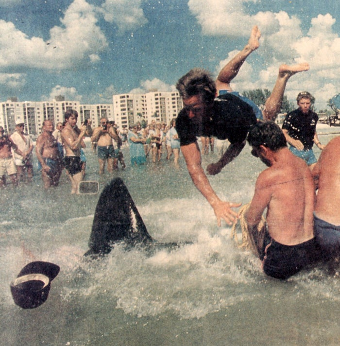 Jim Horton flies through the air after being slapped by a beached pilot whale's tail during a rescue at Florida's Fort Myers Beach.