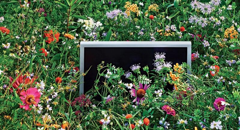 digital detox david roberts technology mindfulness outside nature grist