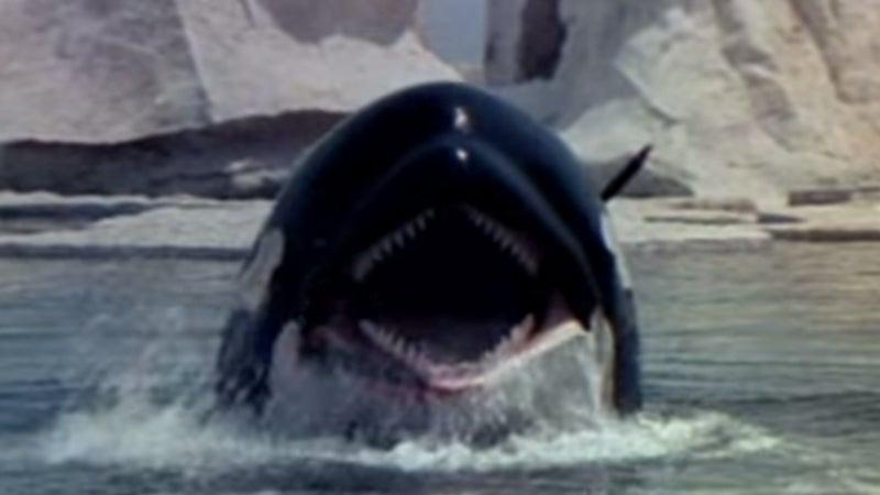 orca halloween movies