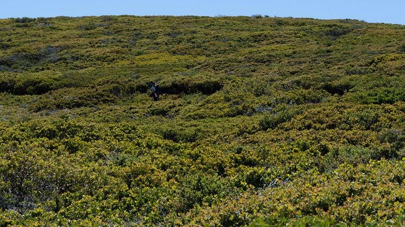 OutsideOnline Mount Laguna San Diego trail field hill best towns high-altitude running