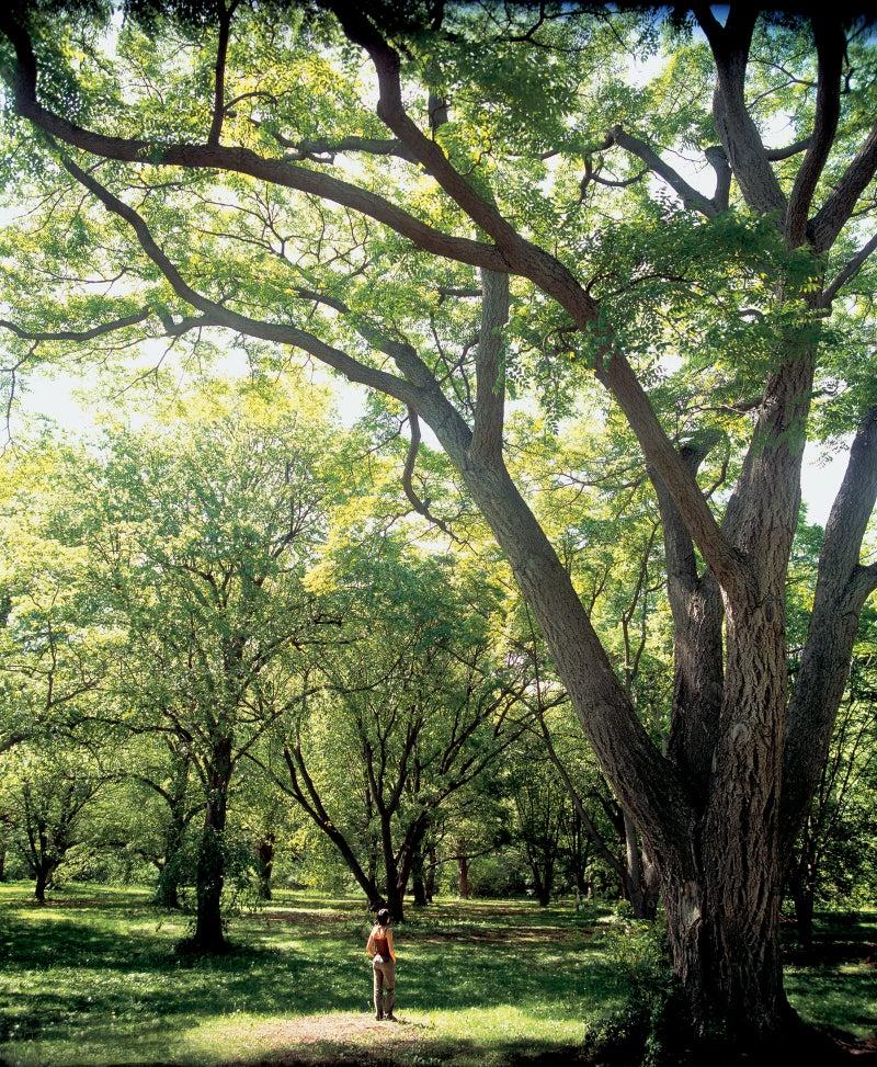 Basking in an Arnold Arboretum sunspot.