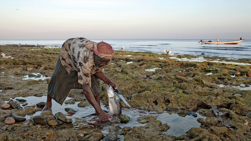 Socotra wildlife beaches sand view landscape sea plants fish