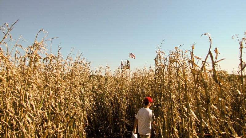 2010 Cherry Crest Farms Corn Maze Matt Pennsylvannia
