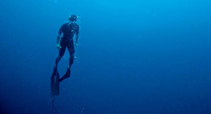 chris fischer galapagos diving shark ocearch