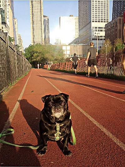 The most supportive running buddy.