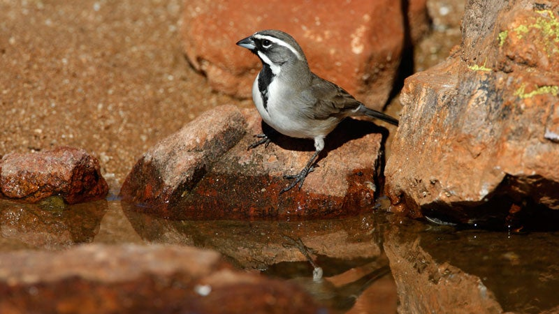 OutsideOnline endangered Southwest American hot climate change