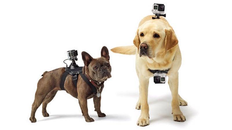 pets gopro fetch camera accessories