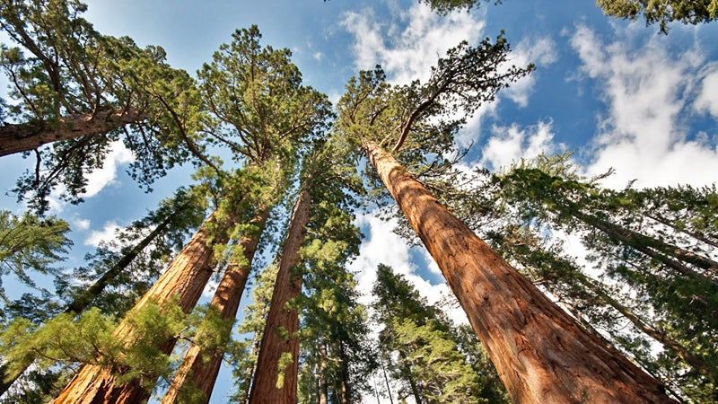 california mariposa grove yosemite family friendly hikes outside online travel agent yosemite national park giant sequoia